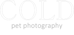 Cold Photography logo